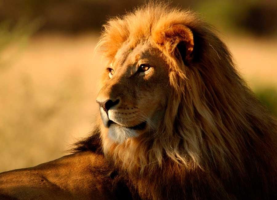 pacote-viajar-turismo-africa-cape-town-kruger-park-safari-011