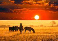 pacote-viajar-turismo-africa-cape-town-kruger-park-safari